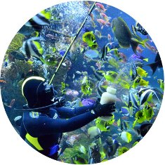 Океанариум S.E.A. AQUARIUM на острове Сентоза