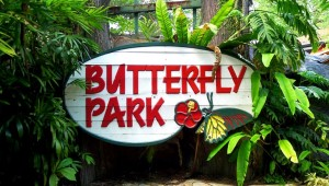 Парк бабочек и Королевство насекомых (Butterfly Park & Insect Kingdom), Сингапур, остров Сентоза
