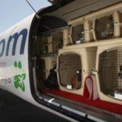 Перевозка домашних животных в Сингапур