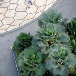 Сады у залива (Gardens by the Bay)