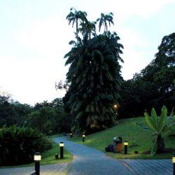 Ботанические Сады Сингапура (Singapore Botanic Gardens)