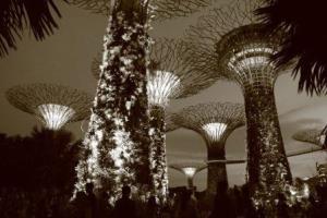 Сингапурские Сады у залива (Gardens by the Bay) и Супер-деревья