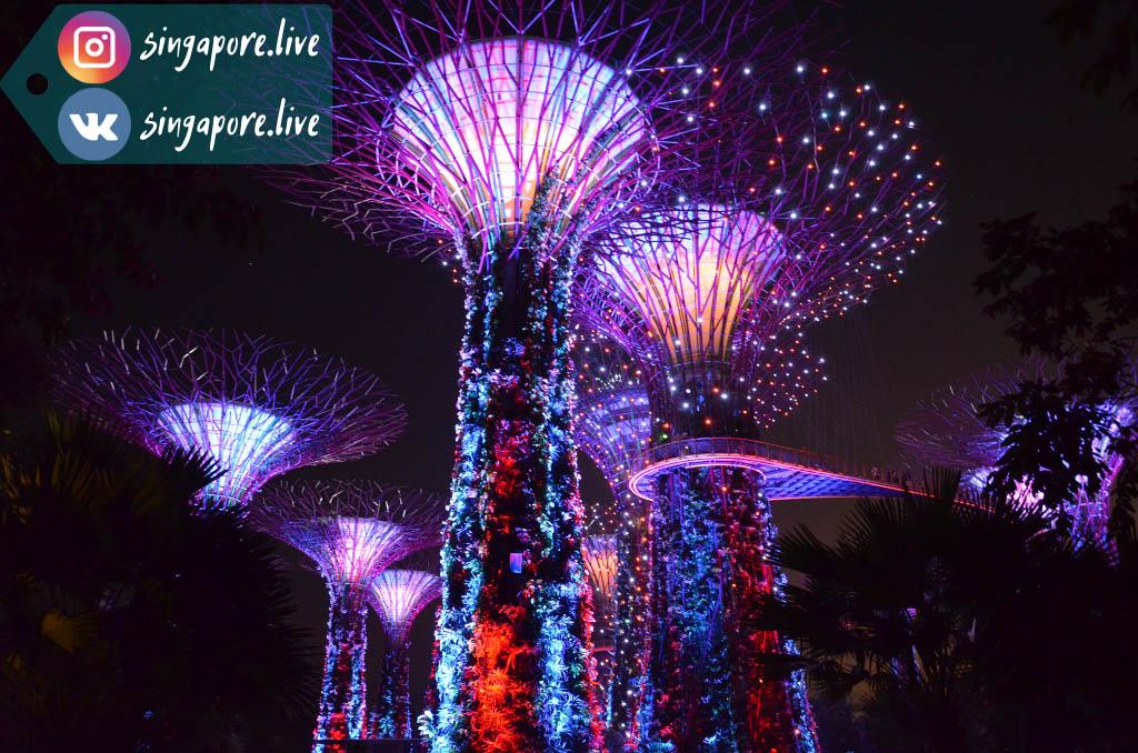 Супердеревья в Садах у залива (Gardens by the Bay), Сингапур
