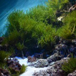 Океанариум S.E.A. AQUARIUM